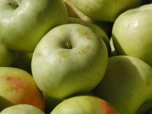 Ein Apfel unter vielen