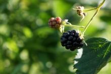 Beeren, Obst & Gemüse