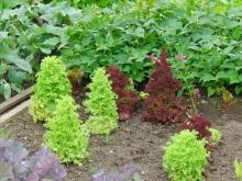 Salatpyramiden