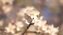 Hervorragende Blüten