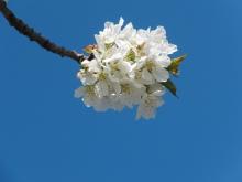 Busch & Baumblüten