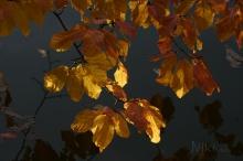 Abschied vom goldenen Oktober