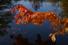 Ast im Herbst übern Teich