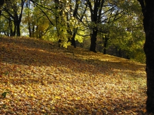 Herbstschatten im Park