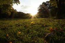 Oktobersonne im Park