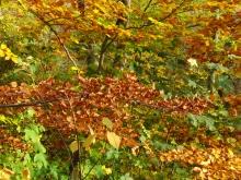 Herbstimpressionen, Laub & Früchte