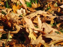 Braunes Herbstlaub am Boden im Sonnenlicht