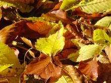 Goldens Blatt im Herbstlaub