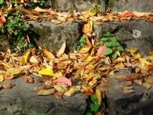 Herbstlaub auf Steintreppen