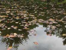 Herbstlaub im Wasser 1