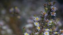 Biene unterwegs im Herbst