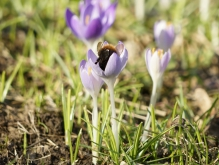 Rein in den Frühling