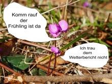 Alpenveilchen Pärchen Fotocomic