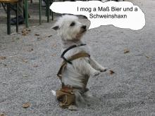 Biergarten-Hund