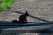 Eichhörnchen auf der Bank