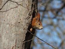 Mal nachschauen (Eichhörnchen)