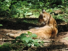 Weitere einheimische Wildtiere