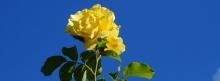 Facebook Titelbilder Blumen 851x315