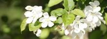 Bieneflug zur Blüte 851x315