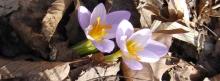 Facebook Titelbilder Frühling 851x315