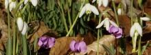 Vorfrühling-Banner 851x315