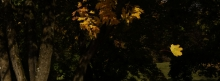 Fallendes Herbstblatt 851x315