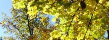 Facebook Titelbilder Herbst 851x315