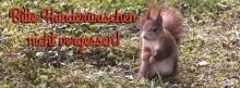 Schöner Kirschblütenzweig 851x315