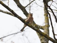 Buchfing singt im Vorfrühling