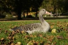 Tierisches Sonnenbad im Oktober