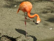 Flamingo beim Nachdenken