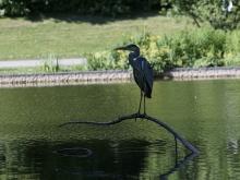 Graureiher im Westpark München