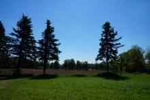 Wiese-Acker und Nadelbäume
